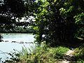 Rhône (fleuve) vu depuis Vernaison 2.jpg