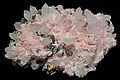 Rhodochrosite, quartz, chalcopyrite.jpg