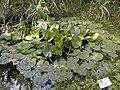 Riserva naturale controllata Lago di Penne-13.JPG
