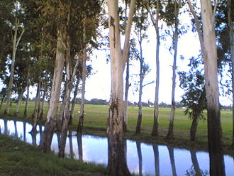 Pilibhit - Road side canals are very common around Pilibhit