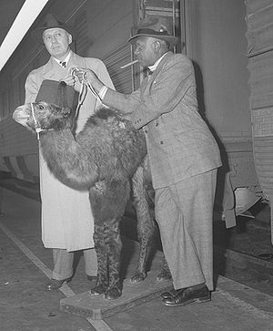 "Eddie ""Rochester"" Anderson - Jack Benny and Eddie Anderson disembark from a train in Los Angeles in 1943 with a camel"