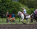 Rodeo Event Calf Roping 43.jpg