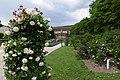Rosarium Baden Doblhoffpark Gartenanlagen 09.jpg