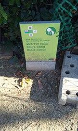Roure b Jardins de la Tamarita - 0133-05-97.jpg
