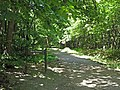 Route du Faîte (Forêt domaniale de Montmorency) - panoramio.jpg