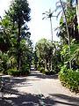 Royal Botanic Gardens Sydney 04.JPG