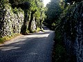 Rugged Lane, Luttrellstown - geograph.org.uk - 576347.jpg