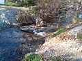 Ruisseau du Rabé.jpg