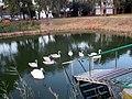 Rusanda605 swan-family.jpg