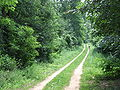 Sóstó forest path.jpg