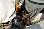 SFS military working dogs train 120227-F-YU668-030.jpg