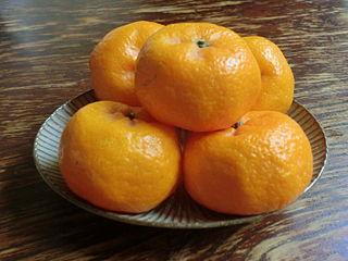 Komikan (fruit) Citrus fruit and plant