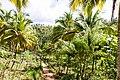 Samaná Province, Dominican Republic - panoramio (82).jpg