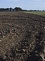 Sandhall fields, near Goole - geograph.org.uk - 1522045.jpg