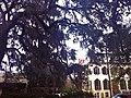 Savannah trees - panoramio.jpg