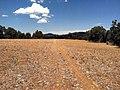 Sawmill Pebble Plain (18475524864).jpg