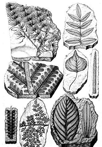 Johann Jakob Scheuchzer - Herbarium deluvianum