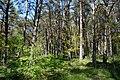 Schleswig-Holstein, Bark, Naturschutzgebiet 30 NIK 4196.JPG