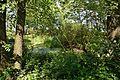 Schleswig-Holstein, Neuendorf, Naturdenkmal NIK 6232.JPG