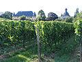 Schloss Vollrads.jpg