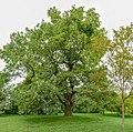 Schlosspark Laxenburg 8788 Mercator 10.jpg