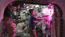 Fil: ScienceCasts- Historic Vegetable Moment on the Space Station.webm