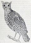 Mauritius Owl