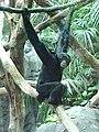 Seattle-ape.jpg