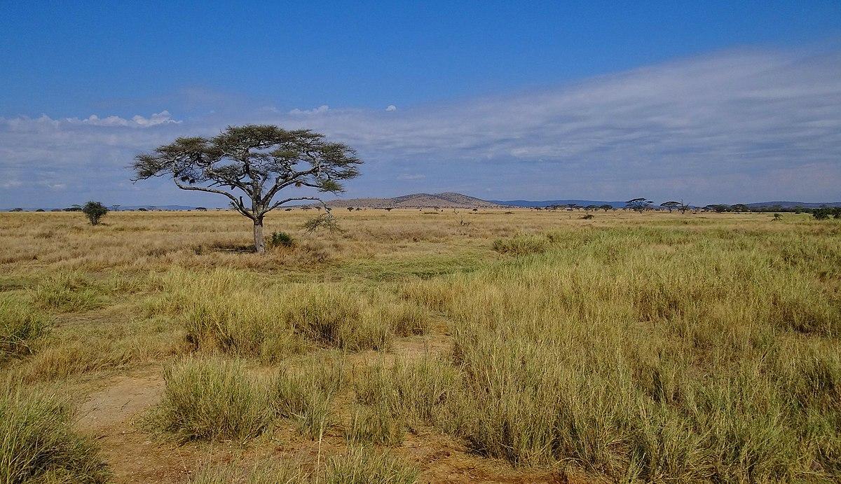 Savanna Grassland Natural Resources