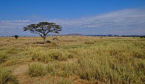Serengeti National Park - Landscape in Serengeti National Park