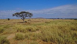 Serengeti National Park National park in Tanzania, Africa