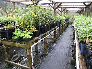 Redwood Creek Native Plant Nursery