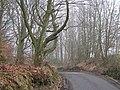 Sheardale Woods - geograph.org.uk - 685818.jpg