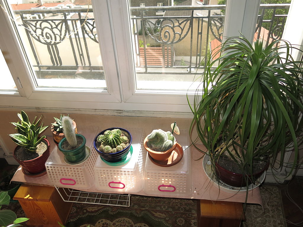 Shelf at the bottom of a window for growing houseplants