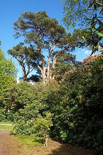 Sheringham Park - Image: Sheringham Park 3