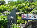 Shingu Hydrangea Park.jpg