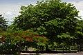 Sihanoukville nature.jpg