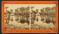 Silver Springs on the Oklawaha River, from Robert N. Dennis collection of stereoscopic views 4.png