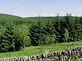 Singdean Forest - geograph.org.uk - 461441.jpg