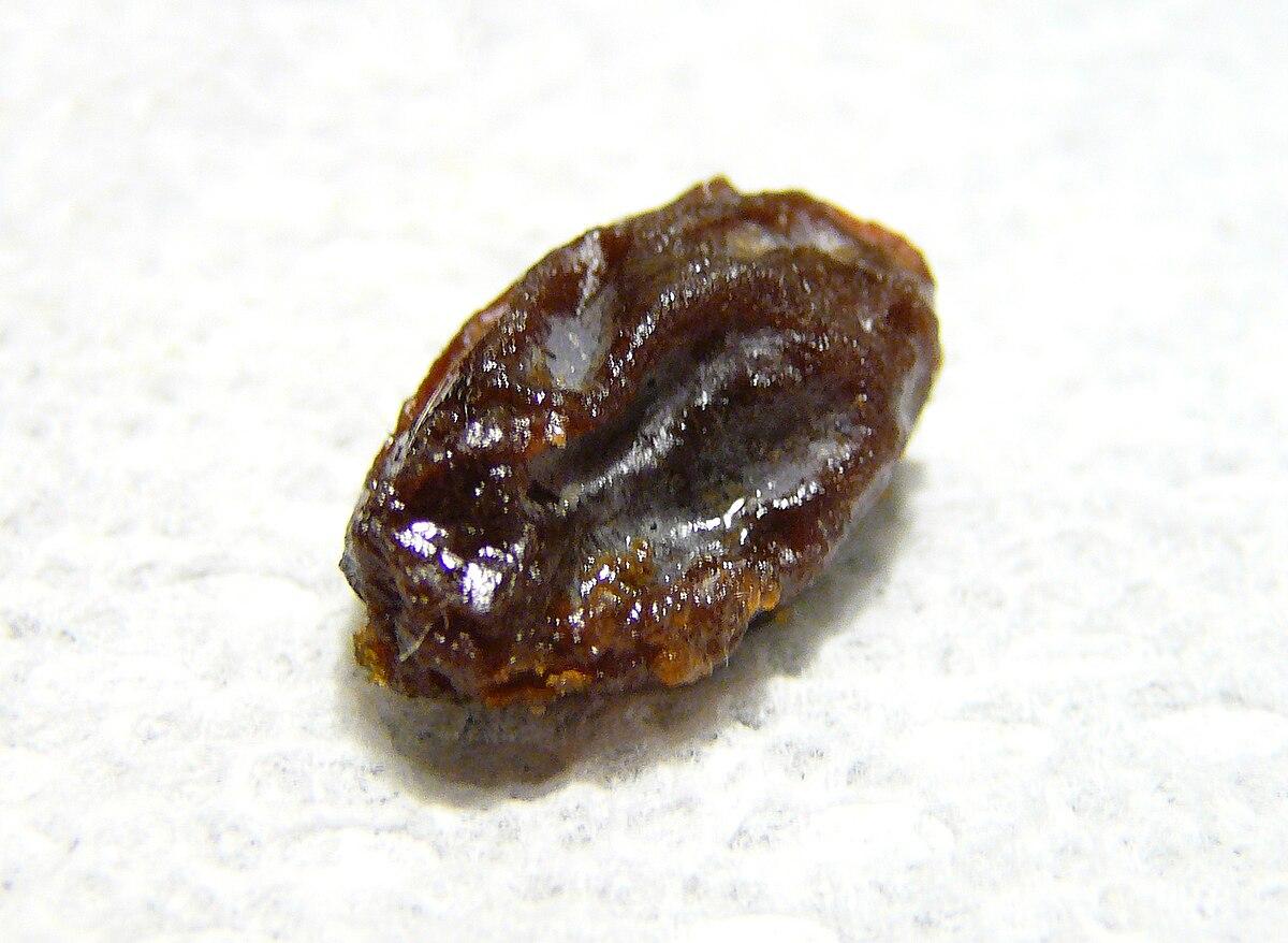 raisin - Simple English Wiktionary