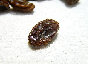 Single raisin (a dried grape)