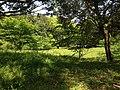 Site of Mirokuji Temple in Usa Shrine.JPG