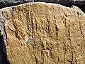 Skolithos - Armorican Quartzite, Ordovician. Berrueco, Saragossa, Spain 001.JPG