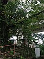 Small shrine on Tokaido Shinkansen under viaduct in Odawara.jpg