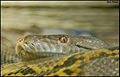 Snake (4848802514).jpg