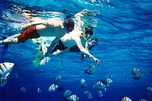 A group of snorkelers observing undersea wildl...