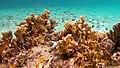 Snorkeling Windsock Steep, Bonaire (12997855465).jpg