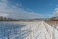 Snow-covered vineyards between Hattenheim and Hallgarten 20150201 1.jpg