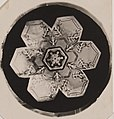 Snowflake - By Wilson Bentley ca. 1905 - MoPA.jpg