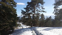 Snowy path in the lesser Caucasus.jpg